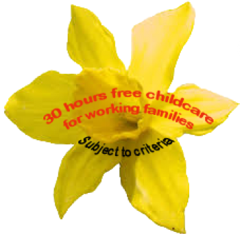single-daffodil-1
