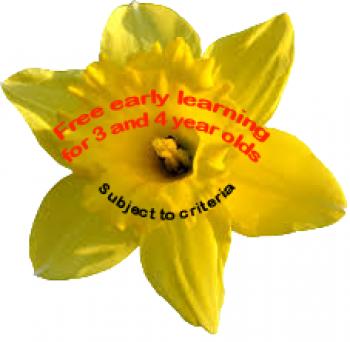 single-daffodil-2
